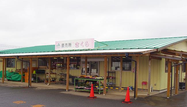 kau_jasakura00